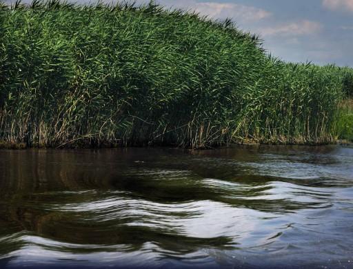 Agnolo Poliziano, Elegía sobre el exilio y la muerte de Ovidio, 1493 | Río Danubio –Istrio– en las inmediaciones de Tulcea (Rumanía), 2011